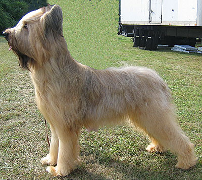 Briard | Dog Agility Equipment