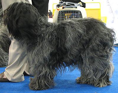 Herding Dog Breeds http://www.dogsindepth.com/herding_dog_breeds/dutch