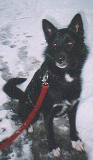 Dog With Black Eye Name