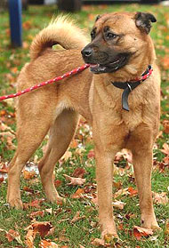 Best dog kennel what are best places to go to in california for Best dog boarding los angeles