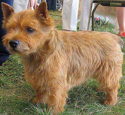 Dogs Breed Names. the reed name of this dog